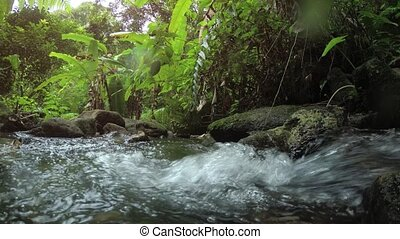 Natural Stream through Phuket Tropical Rainforest with Sound...