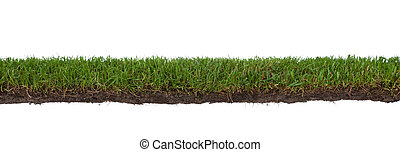 grass with roots and dirt - natural strip of grass with...