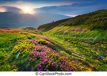 Natural summer scene in Carpathian mountains. Fresh grass...