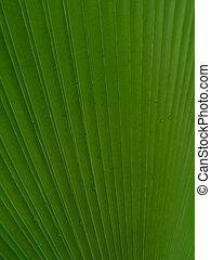 texture - natural texture