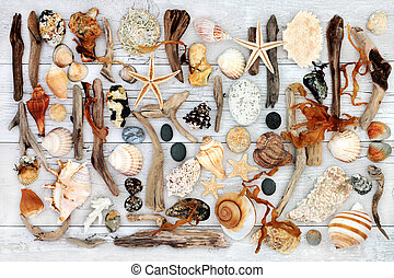 Natural Treasure from the Sea - Abstract seaside collage...