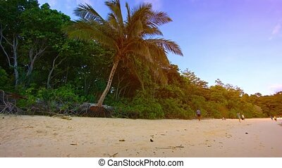 Natural Tree Line along an Undeveloped Tropical Beach -...