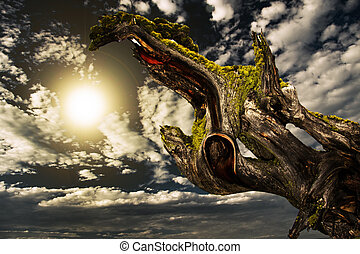 Natural tree and sky