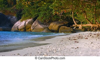 Natural Trees Provide Shade on a Tropical Beach