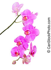 Natural tropical beauty branch of violet orchid flowers