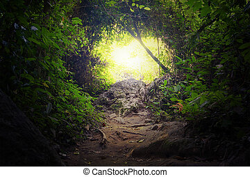 Natural tunnel in tropical jungle forest. Road path way through lush, foliage and trees of evergreen dense rain forest. Mysterious magic background