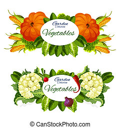 Garden vegetables, pumpkins, sweet corn and cauliflower, radish and red pepper, green lettuce leaves, onion and lettuce. Natural veggies grocery vegetarian products, vector illustration