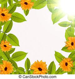 natural, verão, experiência verde, com, flor