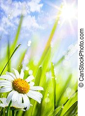 natural, verano, plano de fondo, con, margaritas, flores, en, pasto o césped