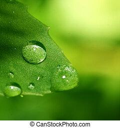 natural water drop on green leaf macro