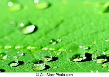 natural waterdrop on green leaf macro