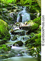 natural waterfall - little waterfall in the woods