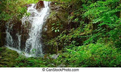 """""""Natural Waterfall Tumbles over Rocks in a Tropical Rainforest, with Sound"""""""