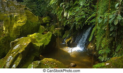 Natural waterfall tumbles playfully over rounded, mossy rocks under ferns
