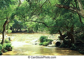 Natural waterfall with tree