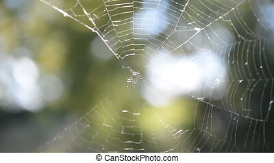 Natural Web on a green background