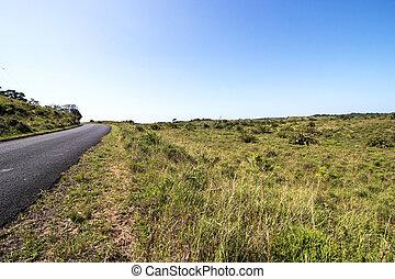 Natural Wetland Vegetation at iSimangaliso Wetland Park in...