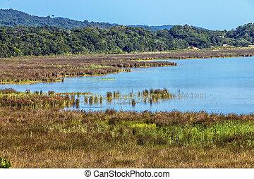 Natural Wetland Vegetation at Lake St Lucia South Africa -...
