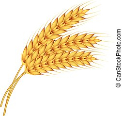 Natural wheat icon, realistic style