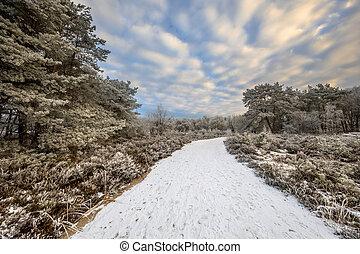 Natural Winter forest landscape Assen Drenthe