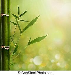 natural, zen, fundos, com, bambu, folhas