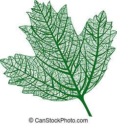 naturale, isolated., macro, leaf., vettore, foglia