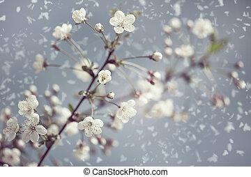 naturale, nevoso, fiore, albicocca, astratto, sfondi,...