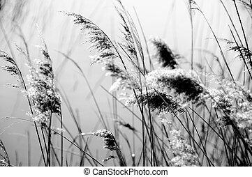 naturale, rilassante, nero, bianco, paesaggio, vista