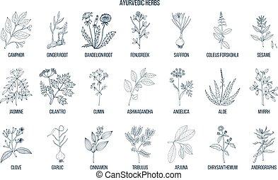 naturale, set, botanico, ayurvedic, erbe