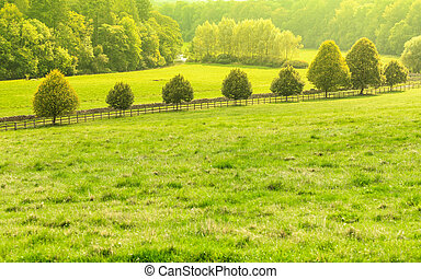 naturaleza, campo, field., paisaje verde, vista