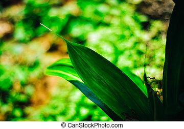 naturaleza, hojas, bokeh, fondo verde, fresco, sol, concept., confuso, jardín, pandan