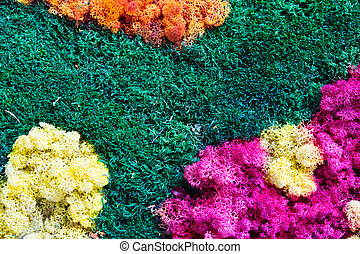 naturaleza, plano de fondo, colorido