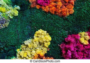 naturaleza, plano de fondo, multicolor