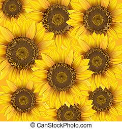 naturaleza, plano de fondo, sunflowers.