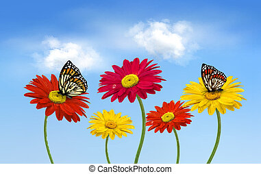 naturaleza, primavera, gerber, flores, con, mariposas, vector, illustration.