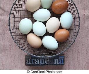 naturally colored eggs of Araucana