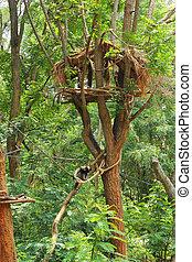 nature., 庭, 家木