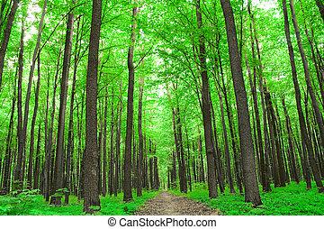 nature., 森林