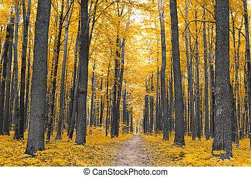 nature., 森林, 中に, 秋