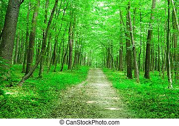 nature., 숲