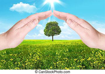 nature., a, palmas, proteja, um, árvore