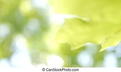 Nature abstract background with natural lens bokeh