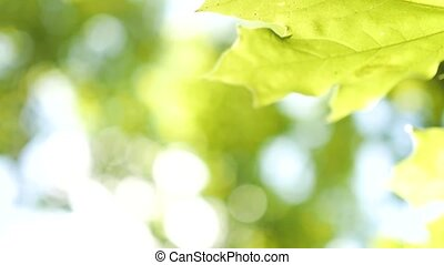 Nature abstract background with natural lens bokeh with leaf...