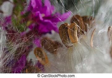 Nature Abstract: Elegant White Milkweed Fibers Presenting...