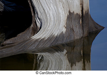 Nature Abstract - Weatherworn Driftwood Reflecting in the Water