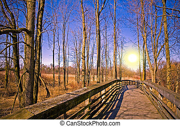 beautiful natural outdoors scenary woods and bright sun