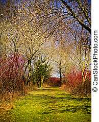 nature and colors - beautiful natural outdoors scenary woods...