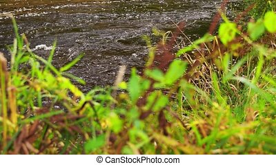 grass growing on river bank - nature and landscape concept...