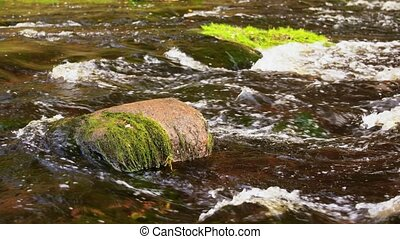 stone covered with moss in river - nature and landscape ...