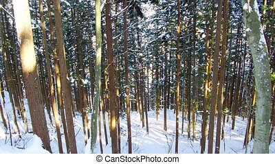 winter forest in japan - nature and wildlife concept -...